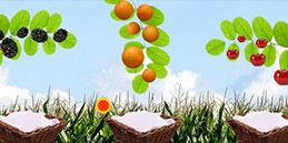 frucht spiele kostenlos